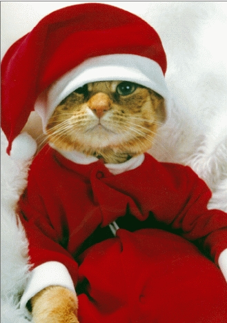 ChristmasKitty.jpg